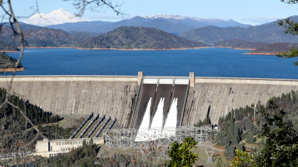 Tiny salamanders could complicate Shasta Dam project | WHP